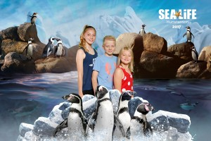 SeaLife_Penguins Background_69H_2017